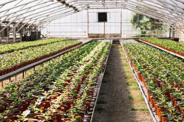 Plantes fraîches poussant dans la serre Photo gratuit