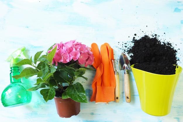 Plantes d'intérieur fleurit hortensia rose, pot de lime, gants orange, pelle de jardin et râteau et pulvérisation Photo Premium