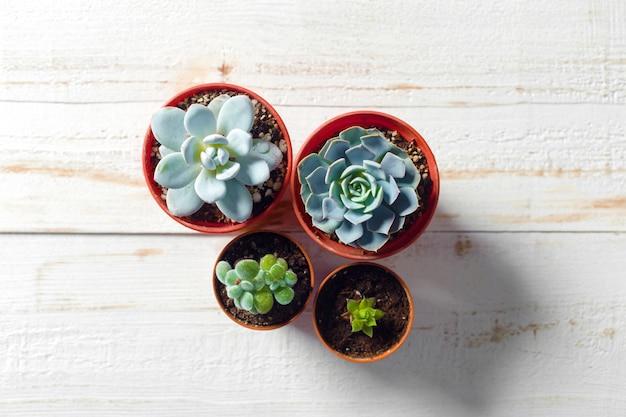 Plantes en pot sur bois blanc Photo Premium