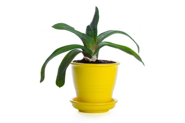 Plantes succulentes en pot sur blanc Photo Premium