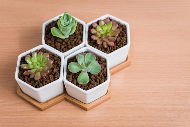 Plantes succulentes en pots sur table en bois, vue de dessus Photo Premium