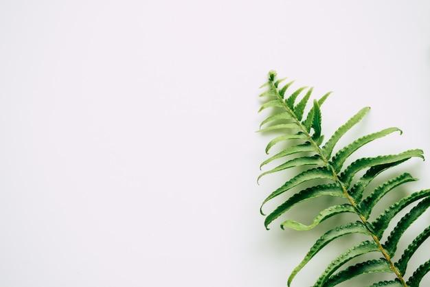 Plantes tropicales sur fond blanc Photo Premium