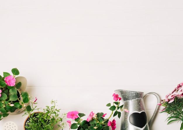Plantes vertes avec arrosage Photo gratuit