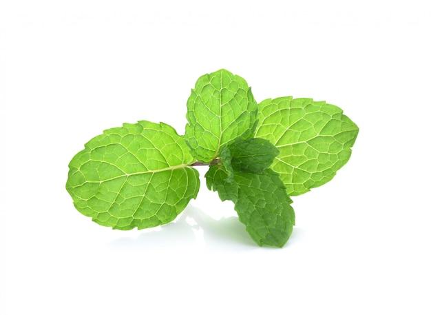 Plantes vertes de feuilles de menthe isolées Photo Premium