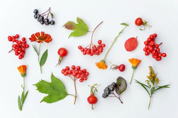 Plantes Viorne Baies De Rowan Dogrose Fleurs Feuilles Colorées Isolé Sur Fond Blanc Photo Premium