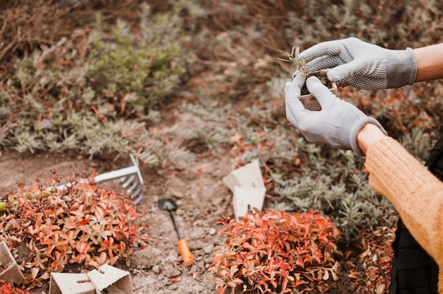 Les plantes Photo gratuit
