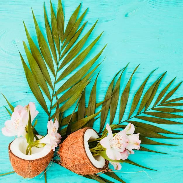 Plantez des feuilles et des noix de coco près des fleurs fraîches Photo gratuit