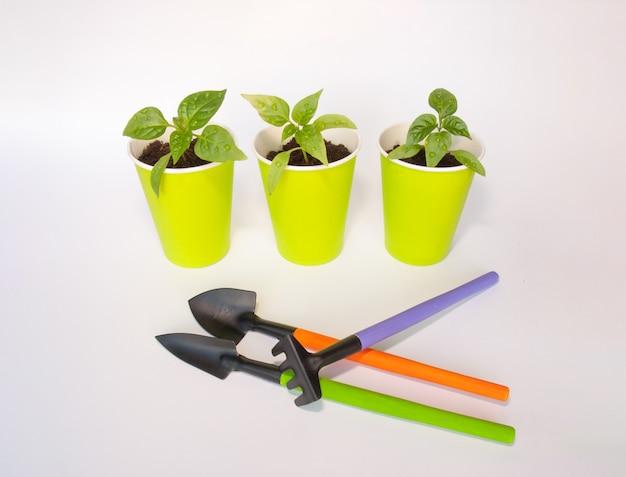 Plants de poivrons dans des pots verts avec des outils de jardin Photo Premium