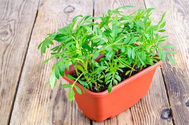 Plants verts de fleurs en pot marron Photo Premium