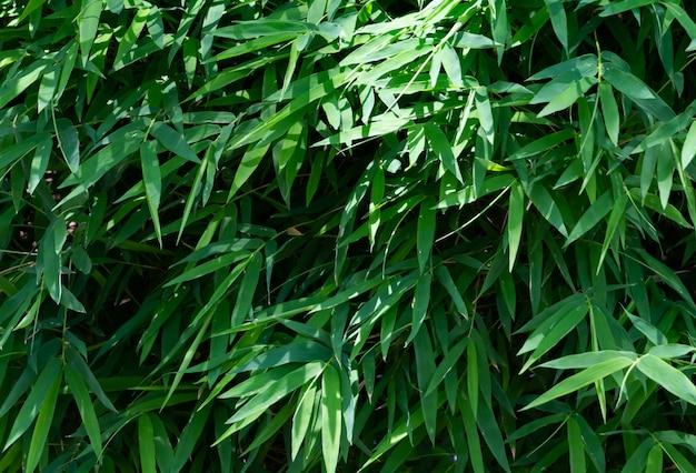 Plein cadre de feuilles de bambou vert Photo Premium