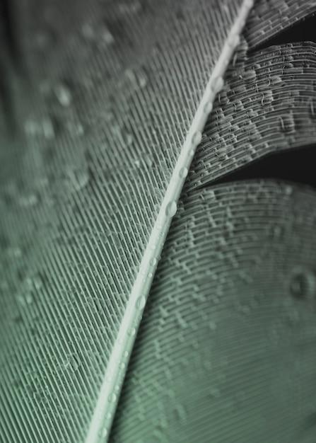 Plein cadre de gouttelettes d'eau sur la surface de la plume grise Photo gratuit