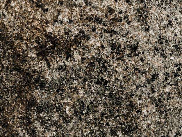 Plein cadre de mousse poussant sur un rocher Photo gratuit