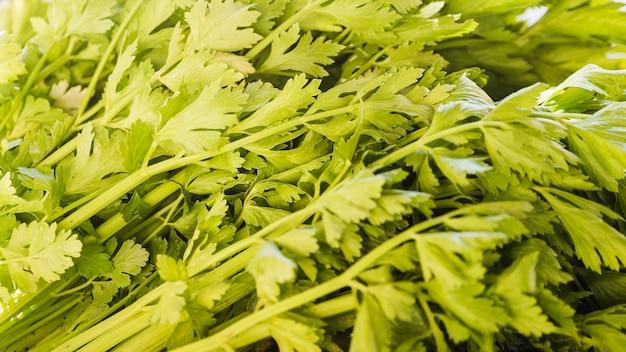 Plein cadre de persil frais vert à vendre au marché Photo gratuit