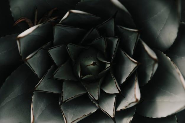 Plein cadre d'une plante succulente abstraite Photo gratuit