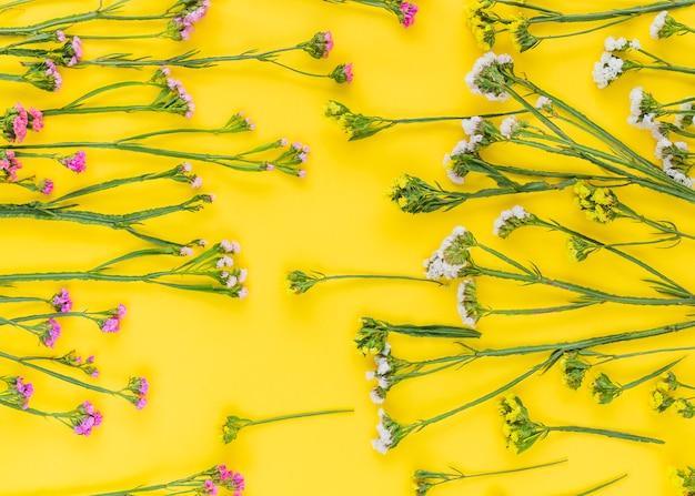 Plein cadre de rose; fleurs blanches et jaunes disposées sur un fond coloré Photo gratuit