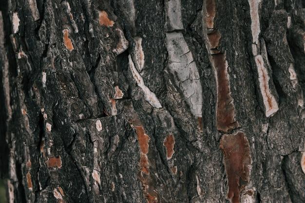 Plein cadre de texture d'écorce d'arbre macro Photo gratuit