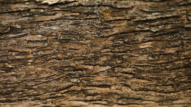 Plein Cadre D'un Vieux Tronc D'arbre Photo gratuit