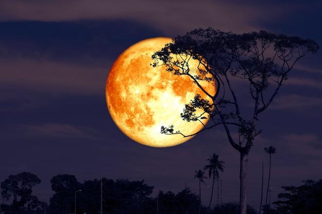 Plein super buck moon sur silhouette nuit ciel rouge Photo Premium