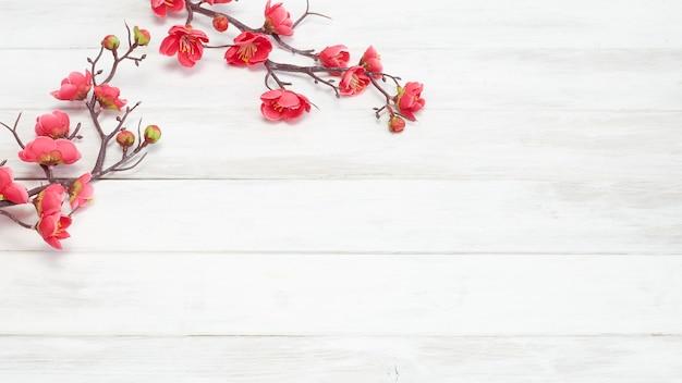 Plum Flowers Blossom Sur Planche De Bois Blanc Photo Premium