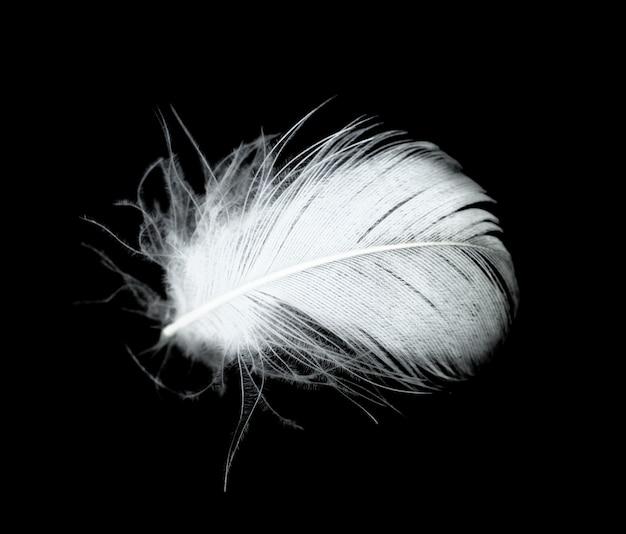 Plume Blanche Sur Fond Noir Photo Premium