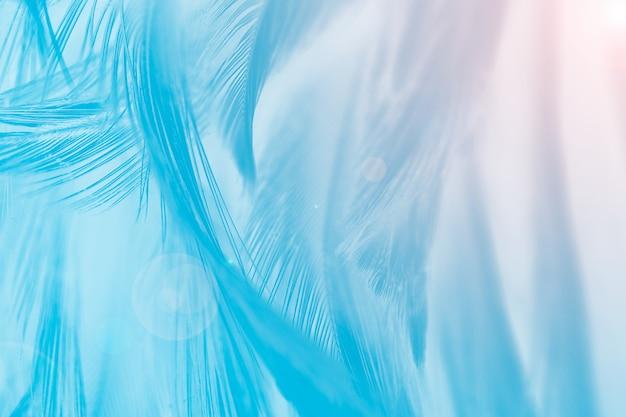 Plume bleue fond avec lumière orange Photo Premium