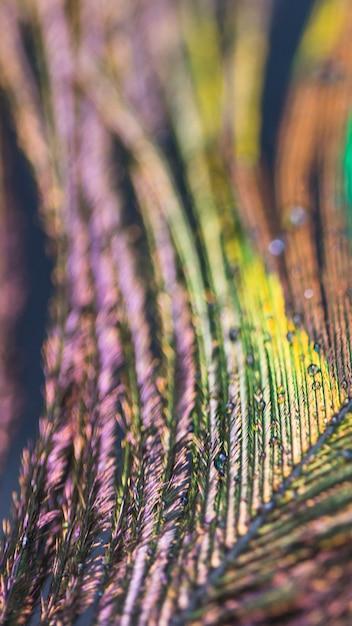 Plume De Paon Abstrait Macro Floue Photo gratuit