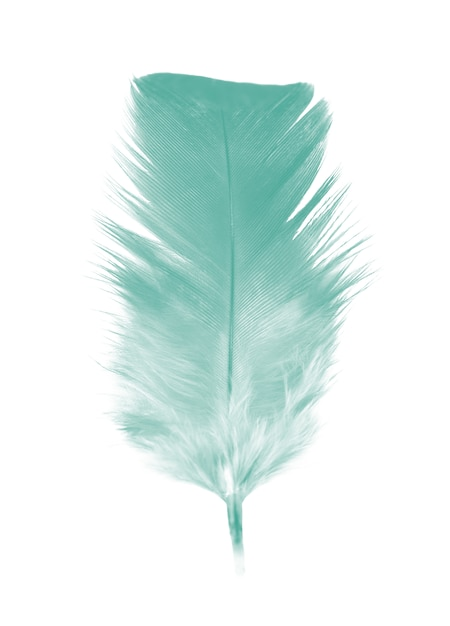 Plume verte isolée sur fond blanc Photo Premium
