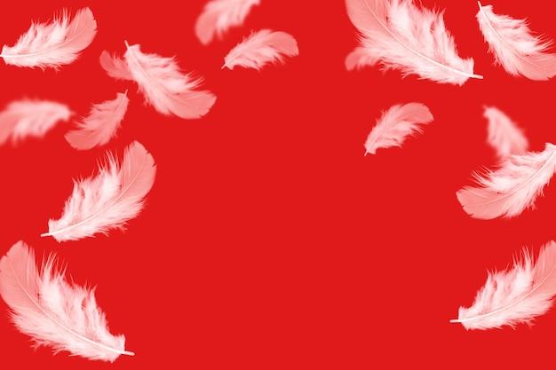 Plumes blanches tombant sur le rouge Photo Premium