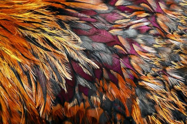 Plumes marron vif du coq se bouchent. Photo Premium