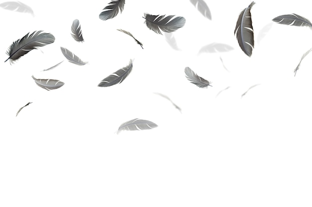 Des plumes noires flottent dans les airs, isolés sur fond blanc. Photo Premium