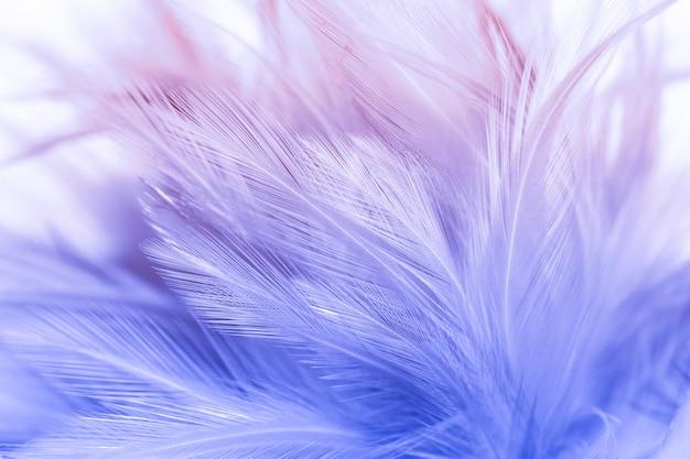 Plumes d'oiseaux et de poulet colorés dans le style doux et flou pour le fond, l'art abstrait Photo Premium