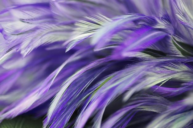 Plumes d'oiseaux et de poulet colorés dans le style doux et flou pour le fond Photo Premium