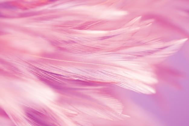 Plumes de poulet colorées dans le style doux et flou pour le fond, couleur pastel Photo Premium