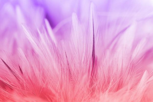 Plumes de poulet colorées dans le style doux et flou pour le fond Photo Premium