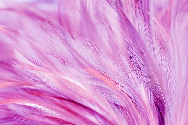 Plumes de poulet pourpres dans le style doux et flou pour le fond Photo Premium