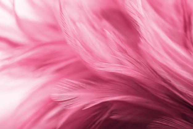 Plumes de poulet roses dans le style doux et flou pour le fond Photo Premium