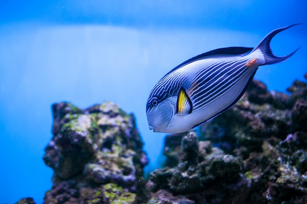 Poisson d'aquarium de mer sous-marin tropical Photo gratuit