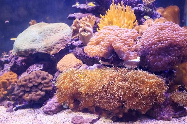 Poisson en aquarium Photo Premium