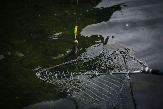Poisson attaché à un hameçon pris dans un filet de pêche Photo gratuit