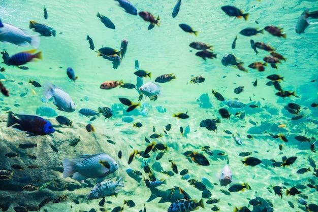 Poisson coloré sous l'eau Photo gratuit