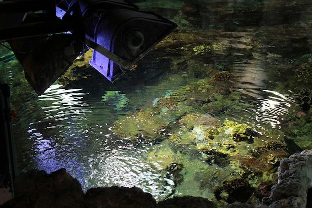 Un poisson dans l'aquarium Photo Premium