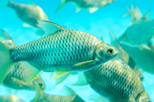 Poisson dans l'eau, fond vert, motif flou Photo Premium