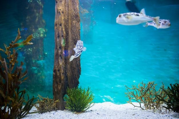 Poisson nageant dans un réservoir Photo Premium