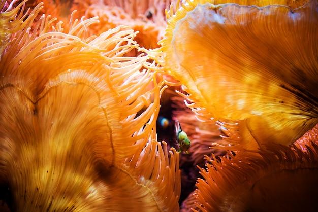 Le poisson et le récif de corail Photo gratuit
