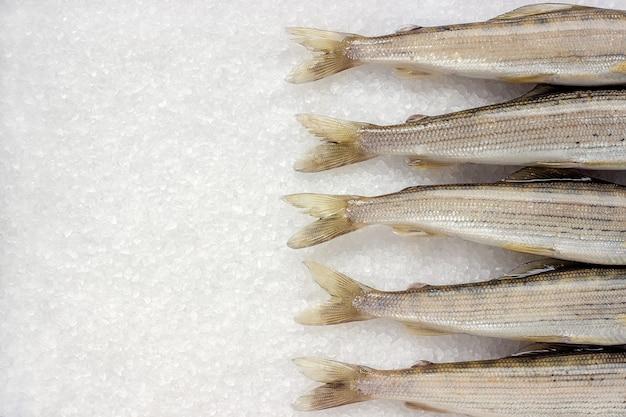 Poisson de rivière sibérienne grisonnant sur gros cristaux de sel blanc Photo Premium