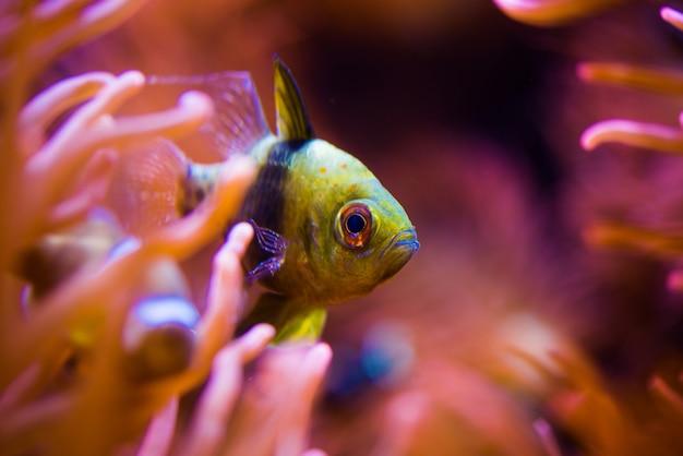 Poisson tropical et récif Photo gratuit
