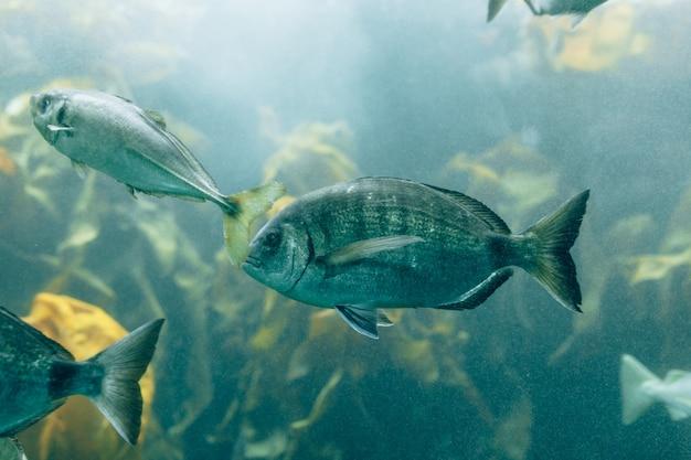 Poissons dans les aquariums ou les réservoirs d'eaux vides dans les piscicultures Photo Premium