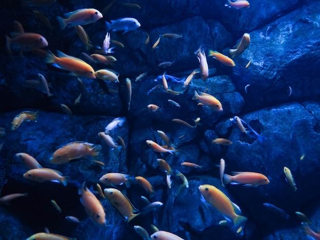 Poissons les habitants des fonds marins dans la mer, beaux poissons, plongée sous-marine. Photo Premium