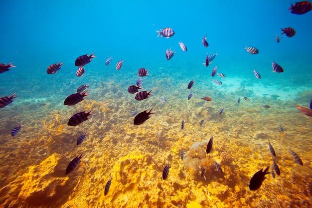 Poissons sur la zone de récifs coralliens Photo gratuit