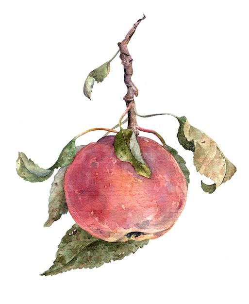 Pomme rouge. sur une branche avec des feuilles. illustration de fruits dessinés à la main aquarelle isolé sur fond blanc Photo Premium